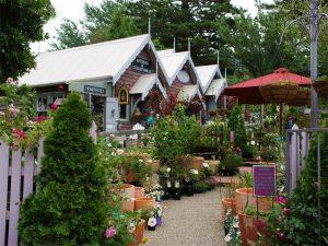 Tilba shops